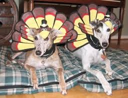 107 best thanksgiving pet pals images on happy