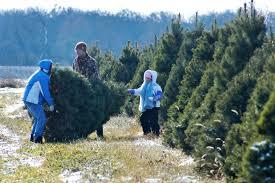 christmas tree farms near me for sale tag marvelous christmas