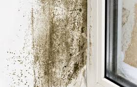 Best Way To Remove Mould From Bathroom Ceiling What You Need To Know About Mold And Mildew Porch Advice
