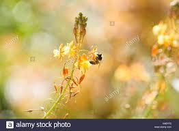 flower gardens orlando florida the best flower in 2017
