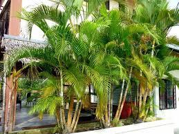 palm tree home decor palm tree home care ltd u2014 alert interior the comfortable fresh