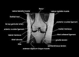 Knee Anatomy Pics Knee Anatomy Mri Knee Coronal Anatomy Free Cross Sectional