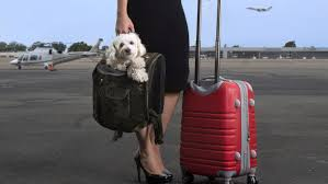 emotional support dogs u0027 on planes are more scam than therapy