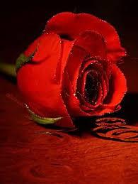 Flower Love Pics - flower love beatiful gifs u0026 flowers pinterest