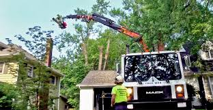mecanil grapple saws a breakthrough for tree removal kbt