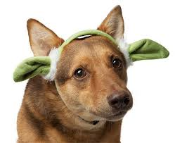 Star Wars Dog Halloween Costumes 5 Halloween Costumes U0027star Wars U0027 Fans