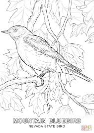nevada state bird coloring page free printable coloring pages