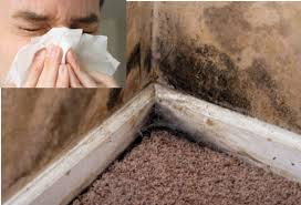 symtoms of mold exposure