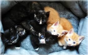 beautiful kittens beautiful kittens looking for new homes bilston west midlands