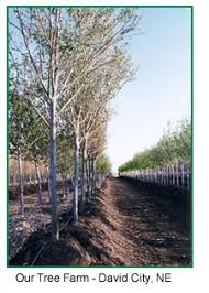 landscape tree nursery omaha trees trees on sale