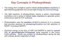The Light Reactions Of Photosynthesis Use And Produce Photosynthesis