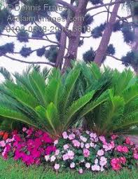 Landscaping Ideas For Florida by Low Maintenance Landscaping For South Florida Florida
