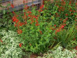 native plant guide 42 best our northern colorado yard images on pinterest colorado