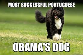Obama Dog Meme - most successful portuguese obama s dog best successful portuguese