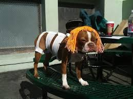 Fifth Element Meme - sassy dog dresses up leeloo from fifth element