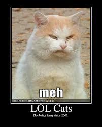 Lolcat Meme - lolcat meme panjury a social review site