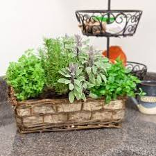 garden gift basket herb garden gift baskets fresh for delivery givingplants
