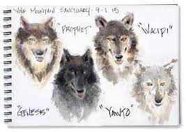 off ramp slideshow sketches with wolves artist mike sheehan