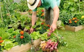 make your veg comfortable in raised beds telegraph