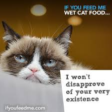 Wet Cat Meme - if you feed me wet cat food i won t disapprove of your very