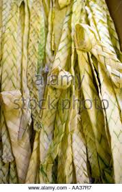 where to buy palms for palm sunday palm sunday church weaving palms for palm sunday stock photo