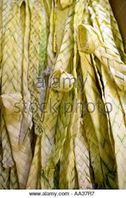 palm sunday palms for sale palm sunday church weaving palms for palm sunday stock photo