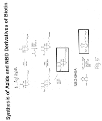 patent us20050233389 methods and compositions for peptide and