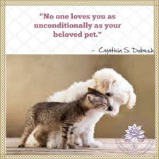 loss of pet loss of pet quotes 18252 quotesnew