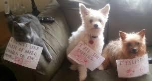 Dog Shaming Meme - i can has cheezburger dog shaming funny animals online