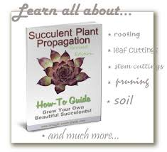 Our Favorite Plants How To by 86 Best Propagation Images On Pinterest Propagation Cacti And