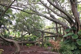 what are the principles for florida friendly landscaping