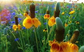 kansas native plant society wichita gardener u0027s almanac testing garden seed native plant