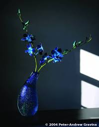 blue dendrobium orchids blue dendrobium orchids by andrew gravina black white