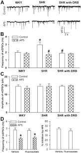 protein kinase ck2 increases glutamatergic input in the