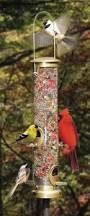 How To Attract Indigo Buntings To Your Backyard Backyard Cedar Springs Post Newspaper