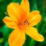edible flower arrangements grow an edible flower bouquet this house