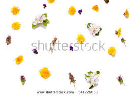 Edible Flowers Edible Flowers Stock Images Royalty Free Images U0026 Vectors