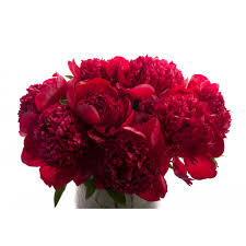 Peonies Bouquet Burgundy Red Peony Bouquet Flower Muse