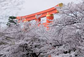 Cherry Blossom Map Jeffrey Friedl U0027s Blog Sakura And The Main Gate Of The Heian