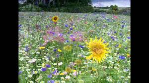 wild flowers in wild meadows wild flower field of dreams youtube