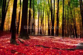colourful autumn forest wallpaper wall mural wallsauce usa colourful autumn forest wall mural photo wallpaper