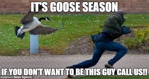 Goose Meme - goose imgflip