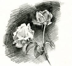 beautifully sketching flowers capturing nature