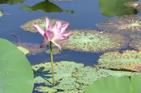 native plants australia plants u0026 gardens leanne u0027s delicious food and travel adventures