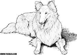 shetland sheepdog coloring yuckles