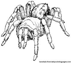 Spider Color Pages Texas Animals by Spider Color Pages