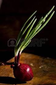 indispensable cuisine indispensable ingredient in mediterranean cuisine stock