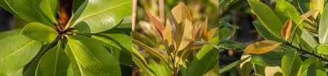 native plant nursery sydney downes wholesale nursery northern rivers