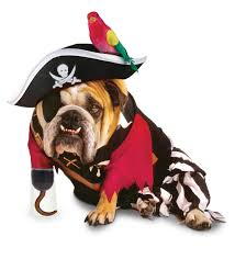 funny dog costumes halloween 40 very funny pet costume pictures