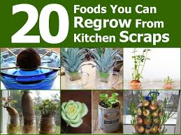 Growing Your Own Vegetable Garden by 20 Foods You Can Regrow From Kitchen Scraps Http Www